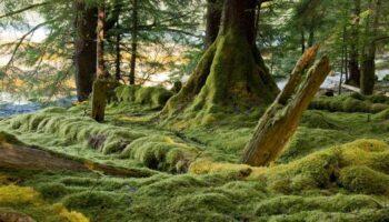 Les sept parcs nationaux de la Colombie-Britannique