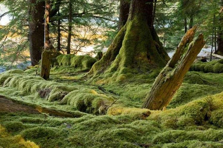 La Réserve de Parc National Gwaii Haanas